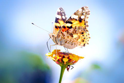 Nature, Butterfly, Insect, Flower, Summer, Plant