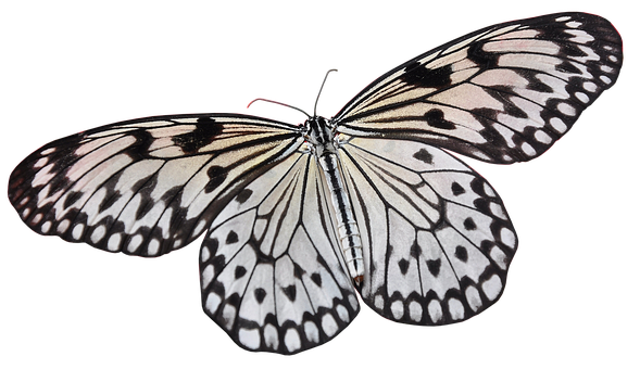 Butterfly, Insect, Wing, Nature, Lepidoptera, Animal