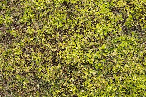 Grass, Texture, Green, Field, Football, Area, Close