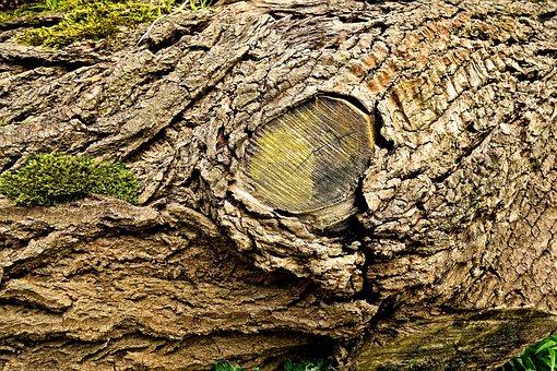 Log, Trunk, Wood, Bark, Fallen Tree, Moss, Decay, Dry