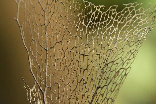 Dry Leaf, Leaf Frame, Skeleton, Dried, Foliage, Bokeh