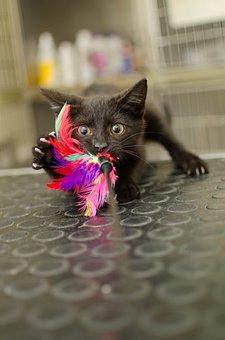 Cat, Kitten, Little Kitty, Black Cat, Fun, Hunting