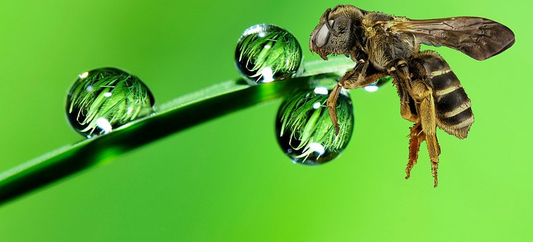 Bee, Nature, Insect, Desktop, Little, Garden, Leaf