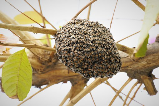 Beehive, Bee Nest, Bee, Insect, Animal, Nature, Tree