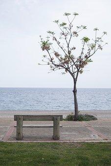 Nature, Tree, Summer, Plant, Landscape, Bank, Sit