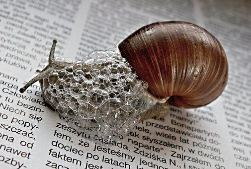 Nature, Newspaper, Snail, Newspapers, Magazines