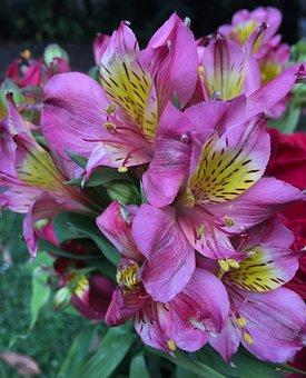 Pink Petals, Flower, Spring, Pink, Pink Flower, Nature