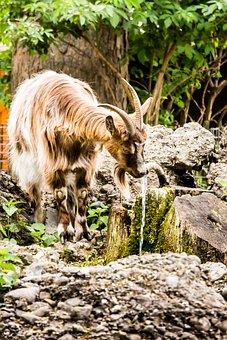Nature, Animal, Mammal, Animal World, Grass, Wild, Wood