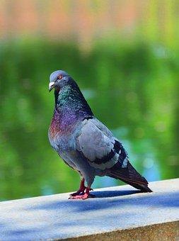 Bird, Nature, Dove, Pen, Wing, Color, Paint