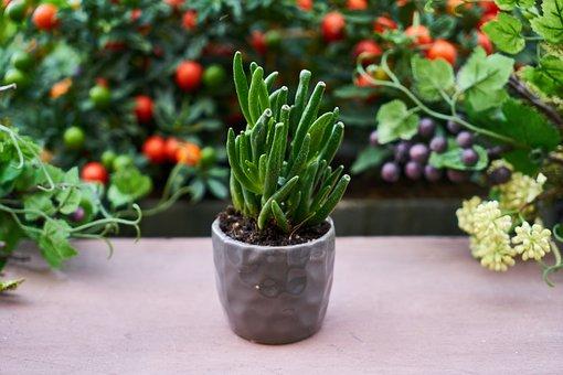 Plant, Flowerpot, Oxygen, Chlorophyll, Photosynthesis
