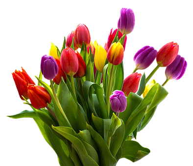 Tulip, Bouquet, Nature, Easter, Flower, Colorful