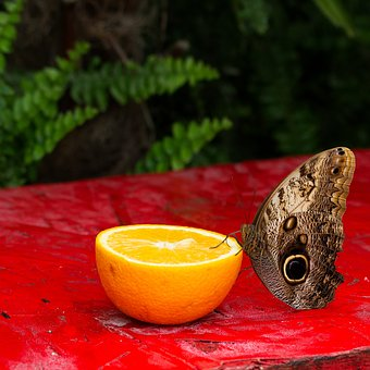 Food, Wood, Fruit, Tropicale, Nature, Exotic, Color