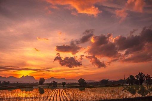Lanskape, Rice Fields, Padi, Cloud, Sunset