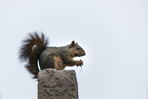 Squirrel, Mammal, Rodent, Nature, Wildlife, Fur