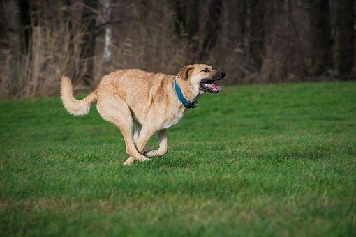 Grass, Dog, Animal, Mammal, Pet, Range Of Motion