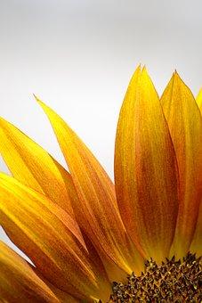 Nature, Flower, Plant, Vivid, Summer
