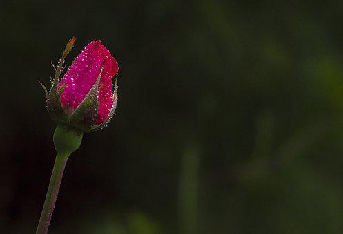 Flower, Nature, Leaf, Summer, Plant, Outdoors, Garden
