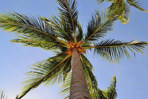 Tree, Tropical, Beach, Coco, Nature, Summer, Costa