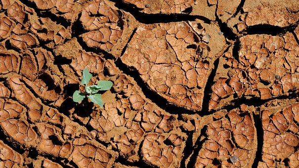 Mongolia, Dry, Parched, Drought, Nature, Desert