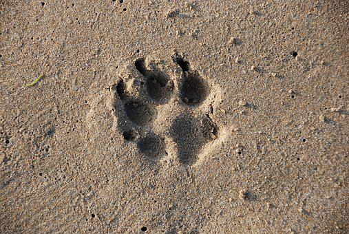 Sand, Desert, Beach, Seashore, Footprint, Sandy, Dog