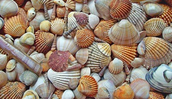 Seashell, Crustaceans, Scallop, Shells, Marine, Nature
