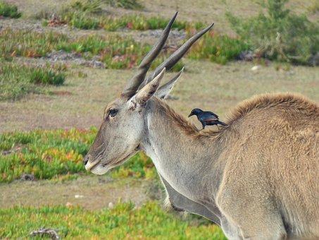 Mammal, Animal World, Nature, Grass, Animal, Wild