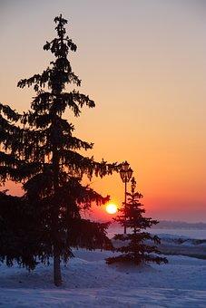 Tree, Winter, Sunset, Sunrise, Landscape, Nature, Snow