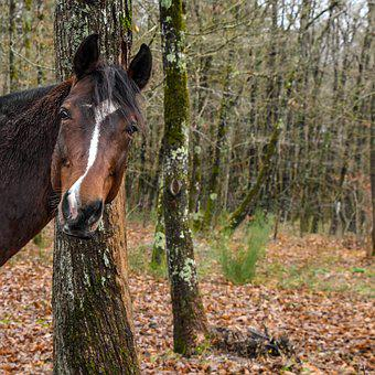 Horse, Curious, Head, Forest, Tree, Leaves, Nature