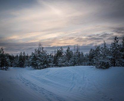 Snow, Winter, Coldly, Frozen, Leann, Sky, Evening, Pine