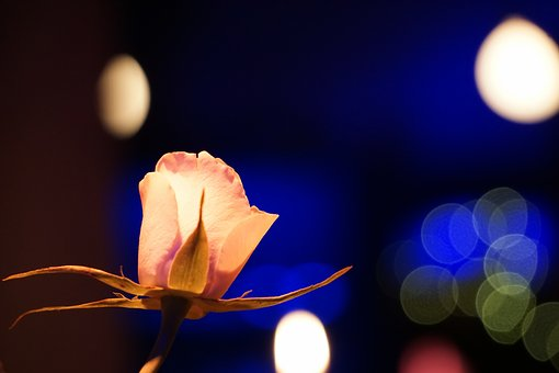 Rose, Bright, Background, Color, Blur, Light