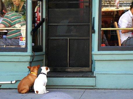 Dog, Human, Door, Input, Loyalty, Pair, Wait, Couple
