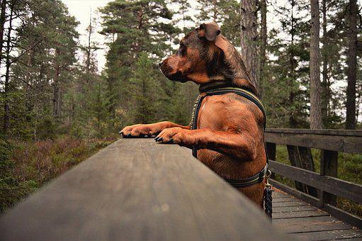 Wood, Man, Outdoor, Adult, Tree, Dog, Park, Portrait