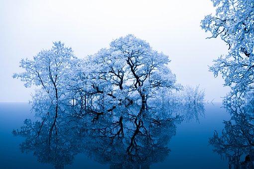 Nature, Inspiration, Trees, Blue, Artistically, Art