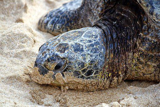 Nature, Turtle, Tropical, Sea, Shell, Marine, Wildlife