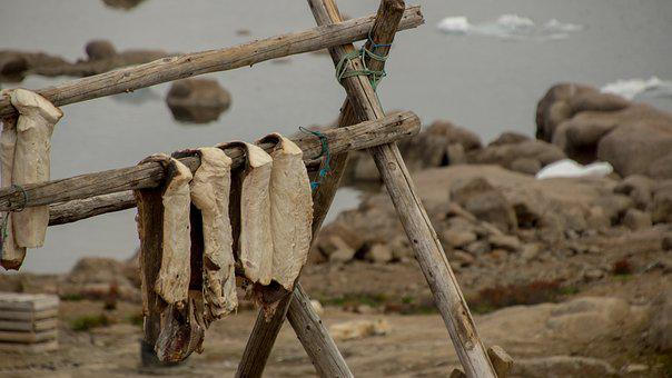 Fish, Catch, Drying Fish, Wood, Wooden