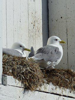 Bird, Nature, Animal, Animal World, Bill, Gulls, Nest