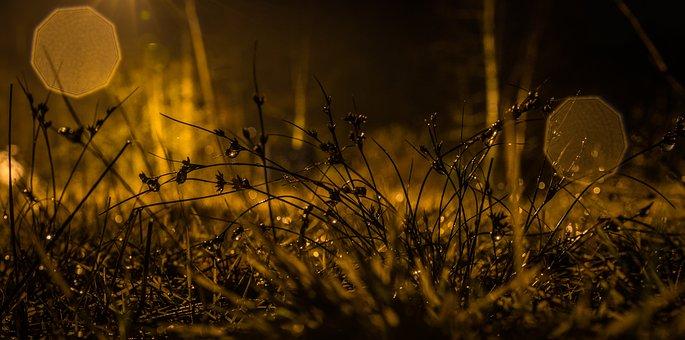 Night, Grass, Bokeh, Rosa, Rain, Drops