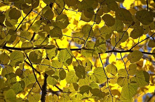 Leaf, Autumn, Nature, Plant, Season, Tree, Growth