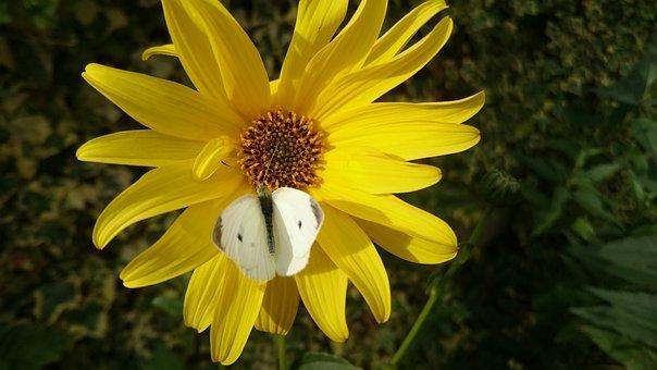 Nature, Plant, Summer, Flower, No Person, Petal