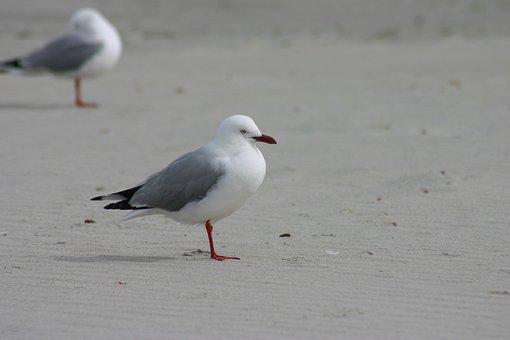 Bird, Water, Wildlife, Sea, Seagulls, Beach, Outdoors