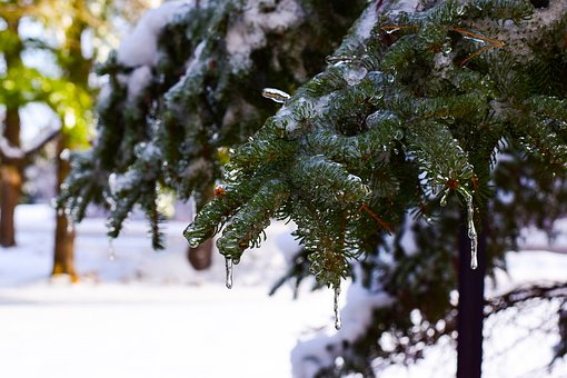 Winter, Tree, Snow, Season, Frost, Ice, Freeze