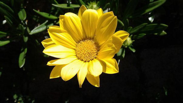 Nature, Plant, Flower, Summer, Garden, Leaf, Color
