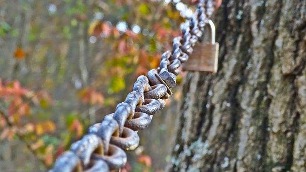 Chain, Lock, Gate, Nature, Tree, Wood, Outdoors, Iron