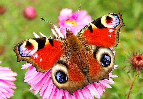 Nature, Butterfly Day, Insect, Animals, Beautiful