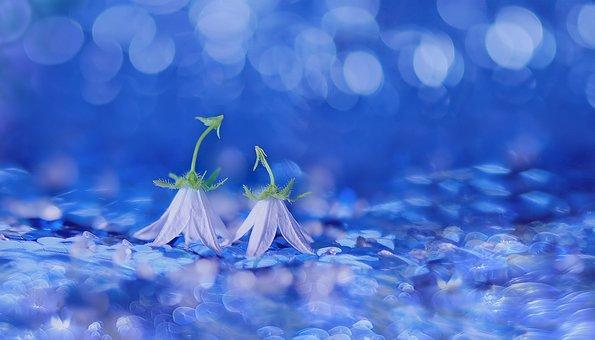 Bellflower, Bluebells, Flowers, Blossom, Bloom