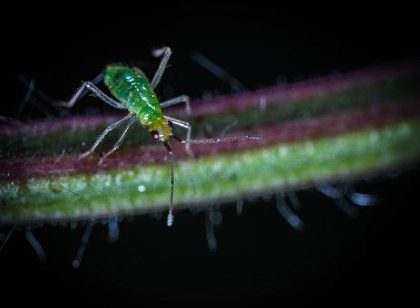 Nature, Insect, Animals, Living Nature, Bespozvonochnoe