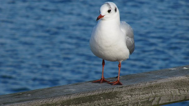 Bird, Waters, Sea, Nature, Animal World, Seagull