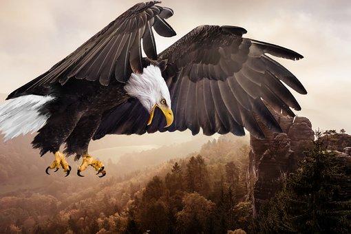 Bird, Animal World, Bird Of Prey, Adler, Nature, Flight