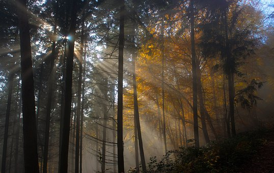 Tree, Nature, Wood, Sun, Fog, Leaf, Dawn, Light