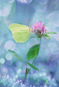Klee, Four Leaf Clover, Plant, Nature, Medicinal Plant